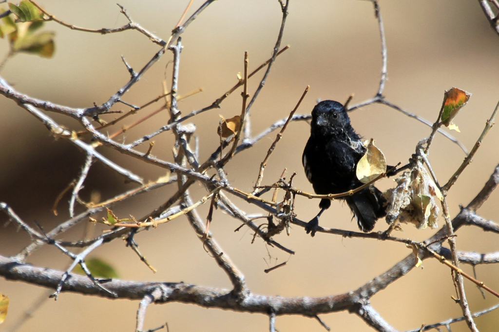 Carp's Tit / Erongo Wilderness Camp, Central Namibia